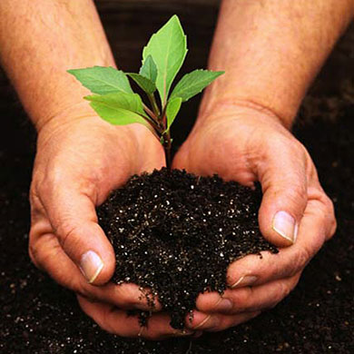 hands holding the rich soil and green seedling