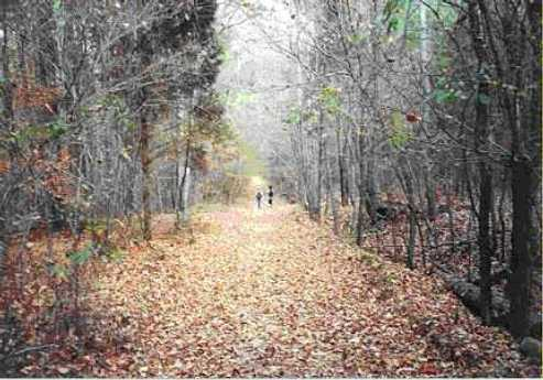 Two people walking through the woods on a leaf-filled path